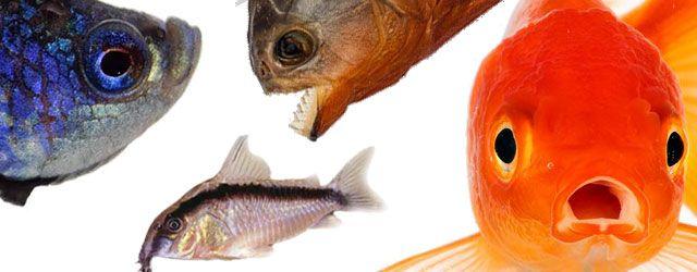De las principales caracteristicas de los peces vamos a ver ahora La división de los peces, la cabeza Y El Sistema Digestivo Del Pez
