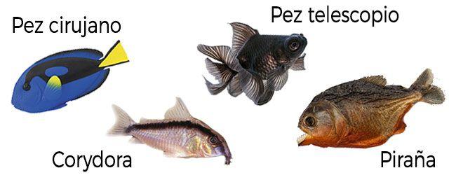 Tipos de peces según su alimentación