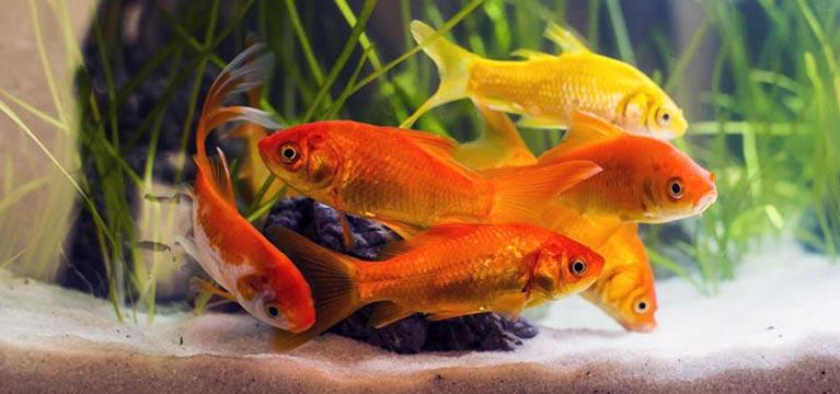 Características de los peces de agua fría
