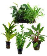 Plantas acuáticas para la acuarofilia