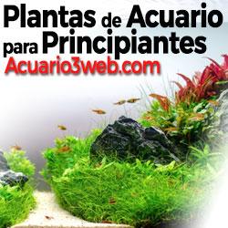 Ver guía de plantas de acuario para principiantes