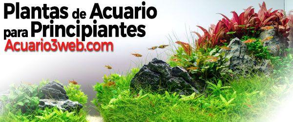 Precioso acuario lleno de plantas de acuario para principiantes