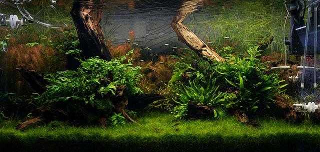 Pros y contras del filtro interno para acuario