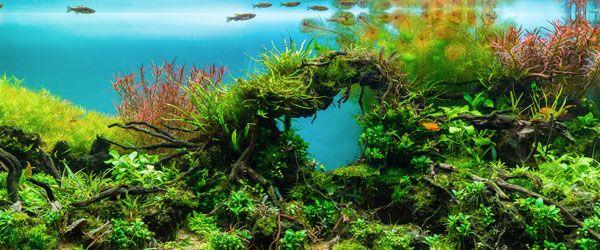 Acuario con plantas acuáticas naturales