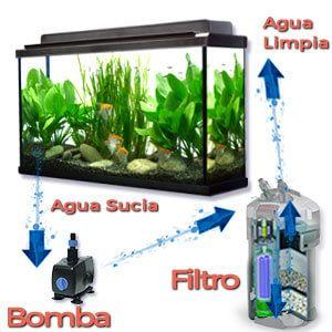 Sistema de Filtración para Acuarios: filtro peces