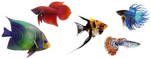 Vemos el Sistema Nervioso del pez en las carcteristicas de los peces