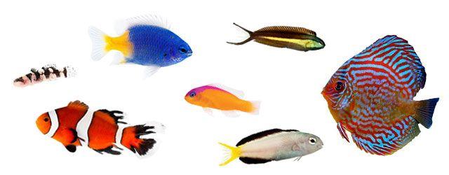 Cualidades de los peces caracteristicas: El Sistema Locomotor de los peces permite moverse eficientemente por el agua.