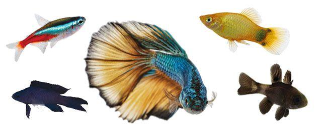 En las siguientes caracteristicas peces vemos el sistema respiratorio de los peces, con las branquias como protagonistas