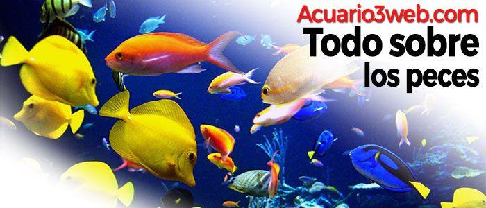 Quieres saber cómo es el pez Todo sobre el Pez