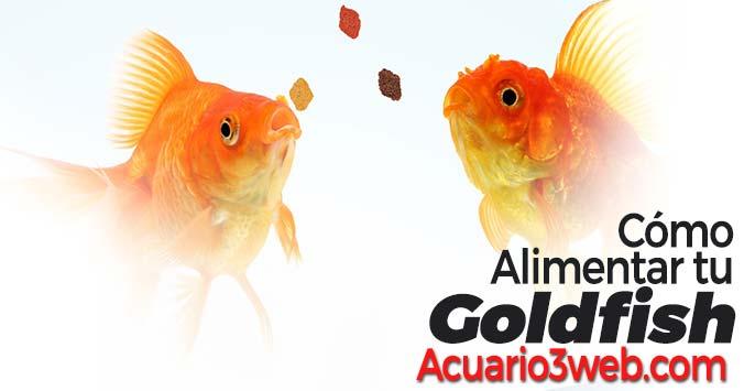 Guía para saber cómo dar de comer a los goldfish