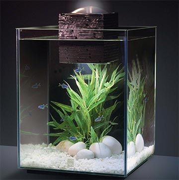 nano acuario Fluval Chi