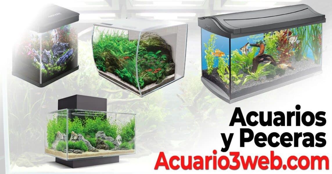 Peceras en Acuario3web