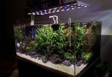 Relación entre el volumen del acuario y los lúmenes por litro