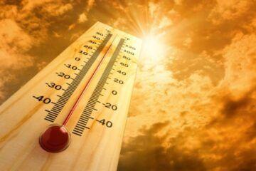 Combate el calor: Mantén tu acuario fresco este verano