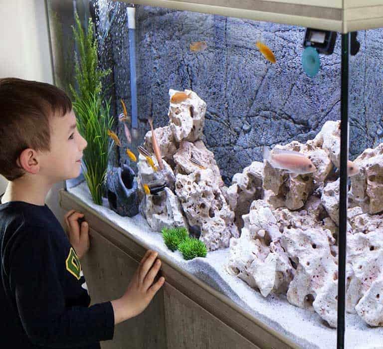 A tus hijos les encantará la acuariofilia