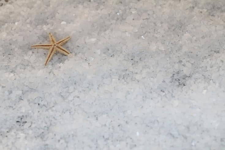 sal con estrella de mar