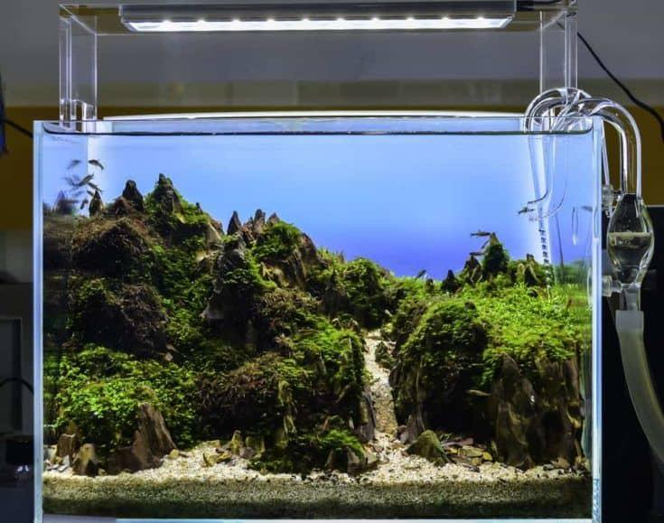 Cerrar imagen del tanque de acuario de estilo natural de paisaje submarino con una variedad de plantas acuáticas en su interior.