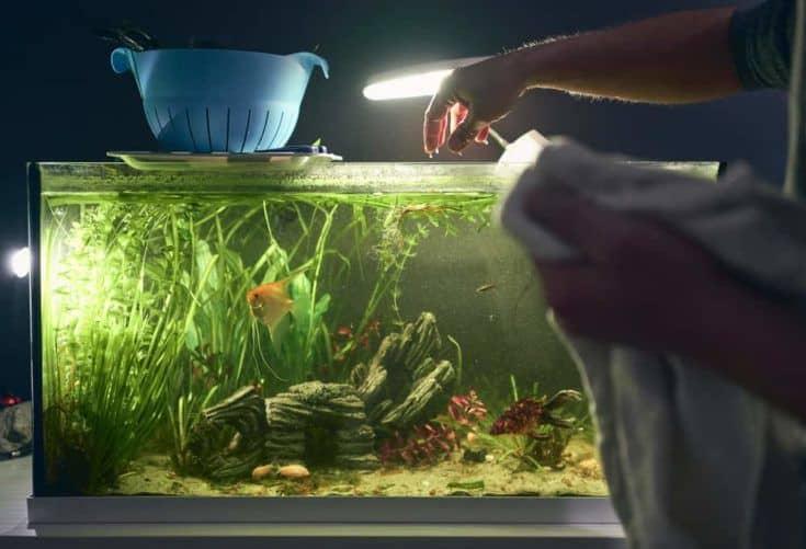 Detalle de la mano del hombre que sale del acuario durante su limpieza.  Concepto de quehaceres domésticos
