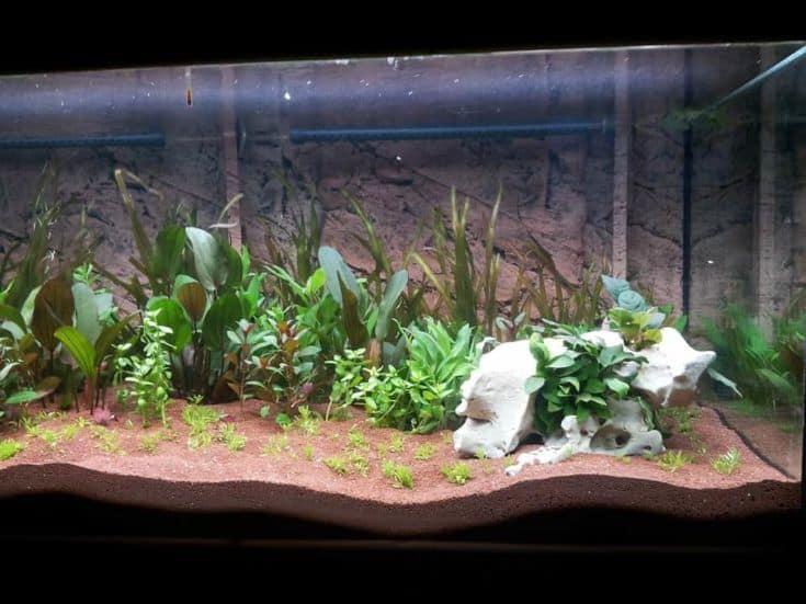 Acuario con plantas y arrecifes.