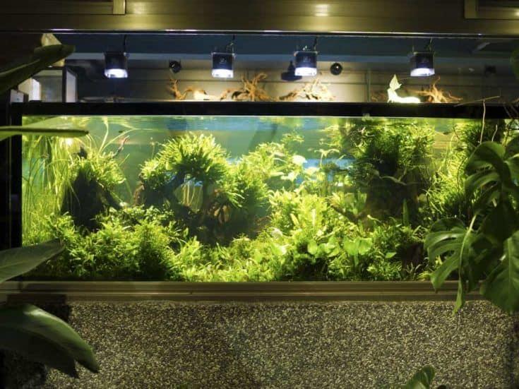 Paisajismo acuático del hermoso acuario de agua dulce tropical plantado