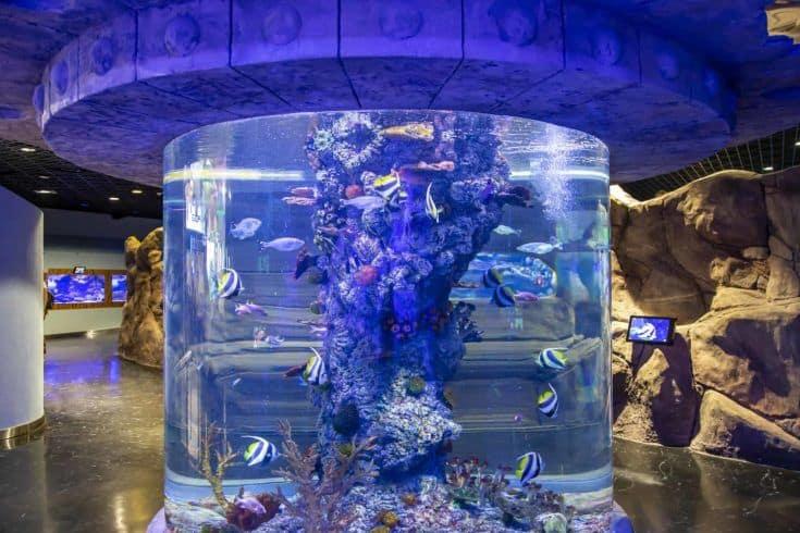 El interior de Oceanarium Crocus City, más de 5000 especies de peces y otros animales de todo el mundo.  Moscú, Rusia