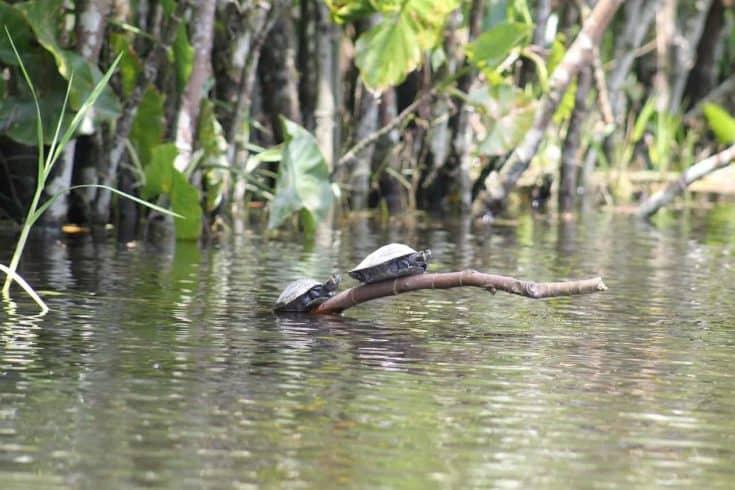 río Amazonas