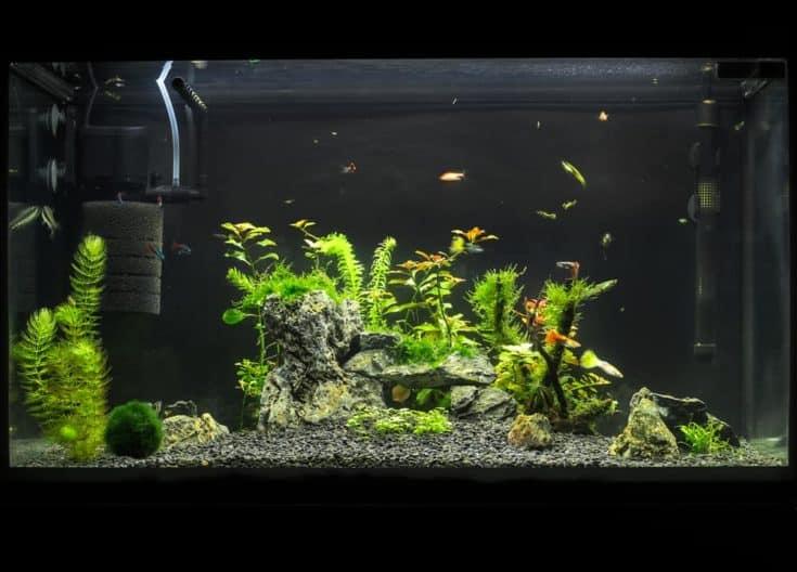 Hermoso acuario de agua dulce tropical plantado con peces.  Aquascape.