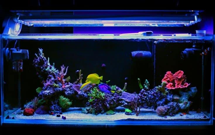 Tanque de acuario de arrecife de agua salada de coral