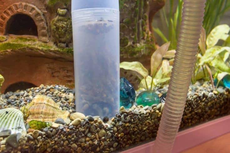 Limpiar la tierra del acuario con un sifón.