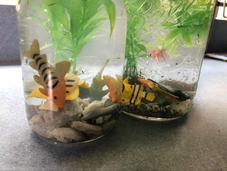 Se agregaron más peces en el acuario de dos frascos.