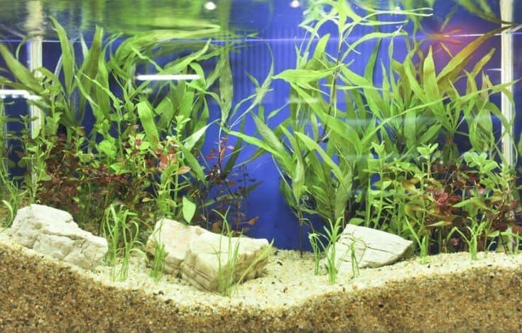 Decoración de acuario en un hermoso fondo