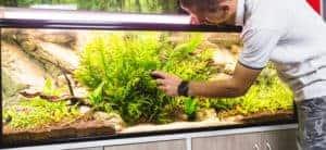 Cómo limpiar una pecera con vinagre - Hombre que usa un limpiador magnético para acuarios para limpiar el acuario.