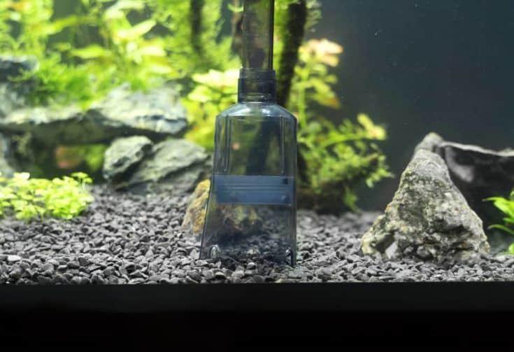 Herramienta limpiadora de grava con sifón en el acuario.