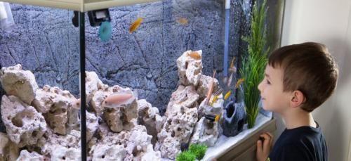 La mejor iluminación LED para arrecifes: guía del comprador y reseñas de productos: primer plano de un niño mirando peces en el acuario.