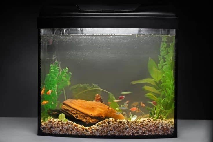 Acuario con peces sobre fondo oscuro