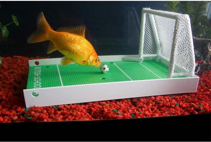 R2 Fish School Kit completo de entrenamiento para peces