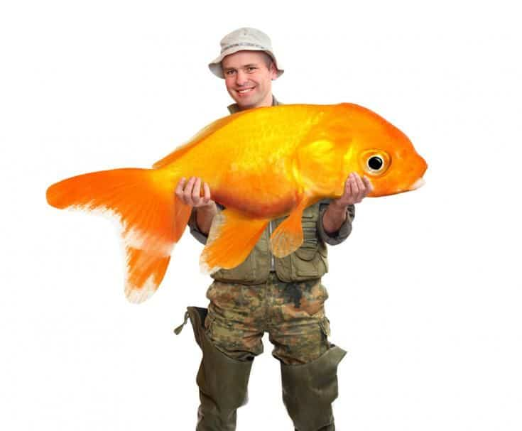 Pescador sosteniendo un gran pez de colores en un fondo blanco.
