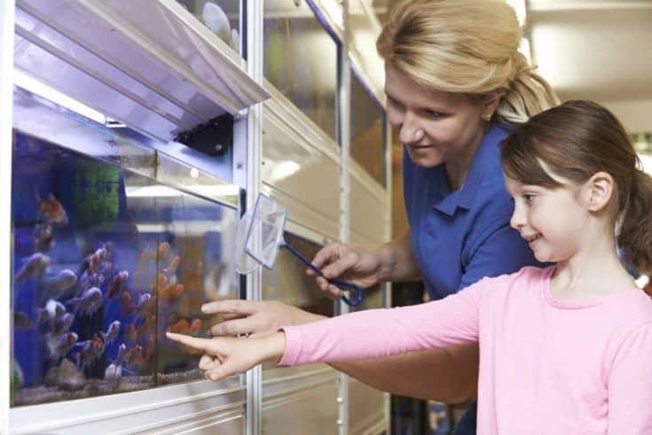 Chica con asistente de ventas eligiendo peces de colores en la tienda de mascotas