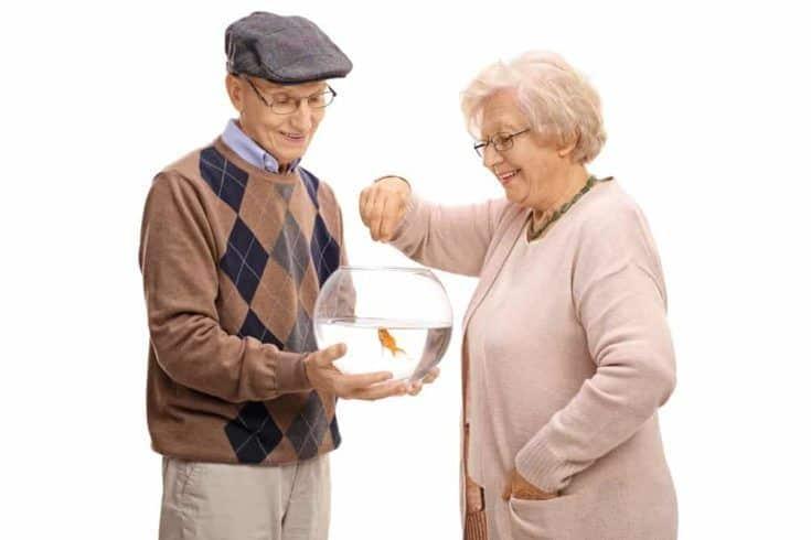 Anciano sosteniendo un recipiente con un pez de colores y una anciana alimentándolo aislado sobre fondo blanco.