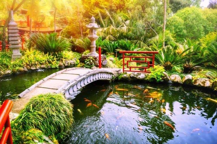 Jardín japonés con peces koi nadando en el estanque.  Fondo de la naturaleza
