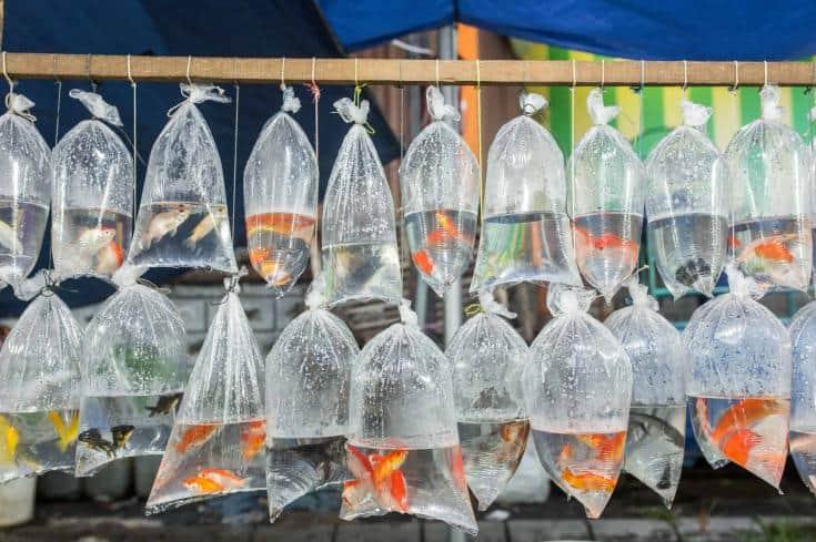 Los peces de acuario aparecen en bolsas de plástico para la venta en el mercado local en Bali, Indonesia