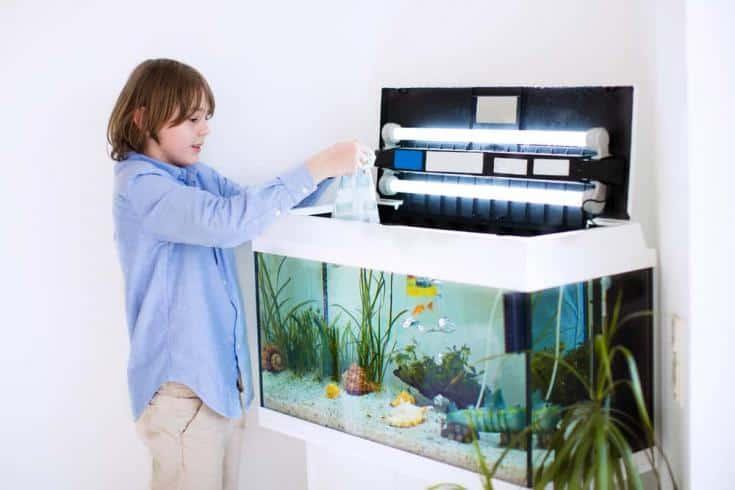 Niño feliz sosteniendo una bolsa de plástico con peces nuevos que compró en la tienda del zoológico para la habitación de su hogar, la alimentación del acuario y el cuidado de las mascotas