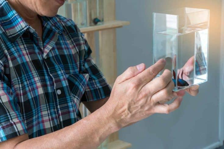 Varón asiático que muestra el tarro de cristal de la lucha siamesa o del pez Betta.  Hombre sujetando un tarro de cristal de betta splendens para vender o hacer una oferta.