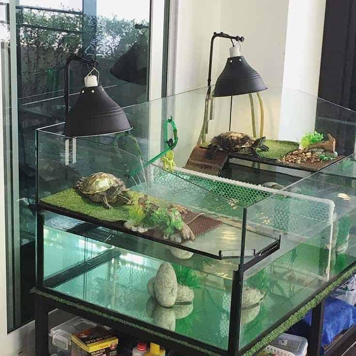 Tanque de tortuga doble