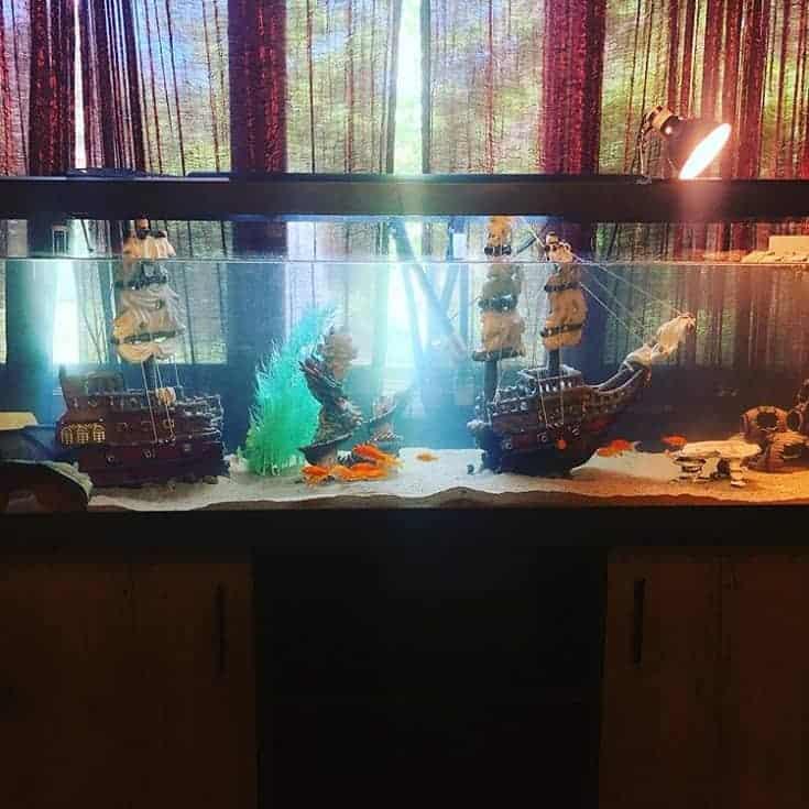 Acuario de tortugas temático creativo