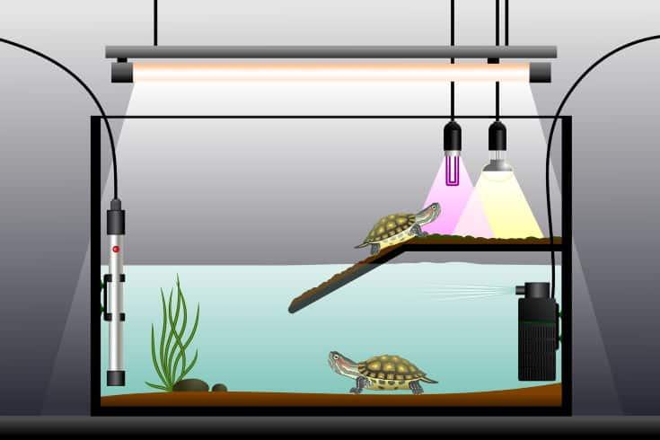 Aquaterrarium, esterilizador UV
