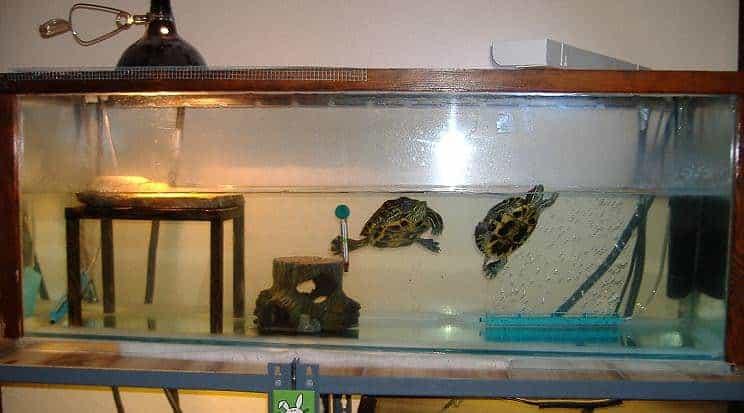El viejo tanque de tortugas