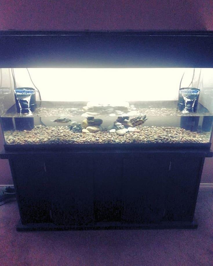 Acuario de tortugas grandes