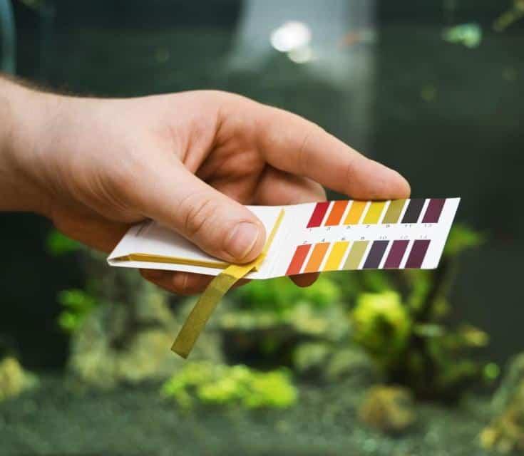 Mano masculina que sostiene las pruebas de pH frente al acuario de agua dulce.