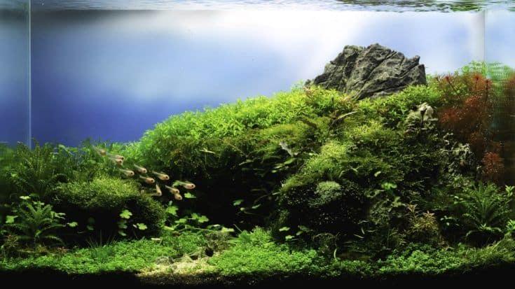 Cerrar imagen del tanque de acuario de estilo paisaje natural con una variedad de plantas acuáticas en su interior.